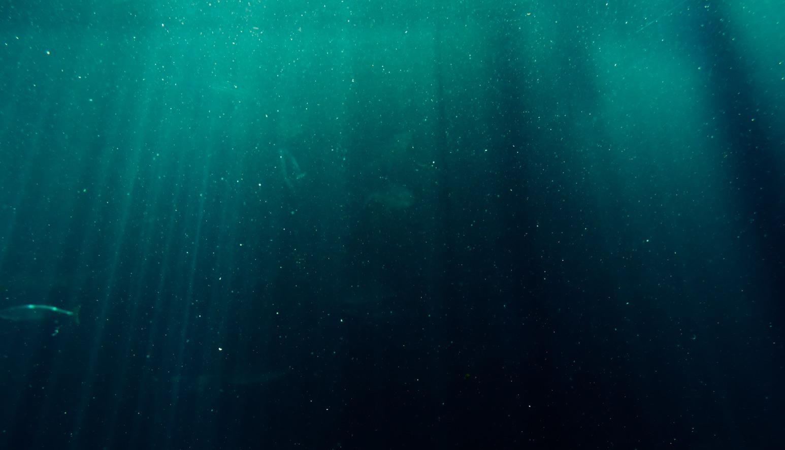 Nuotatori di domani